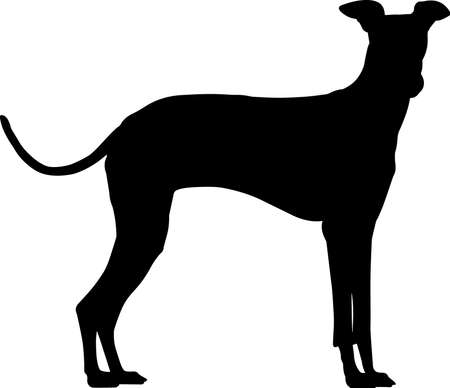 Greyhound 4 isolated vector silhouette