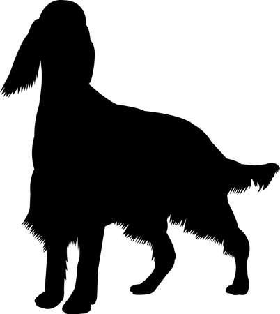 Irish Setter 10 isolated vector silhouette Vector Illustratie