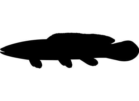 Bowfin Fish Silhouette Vector