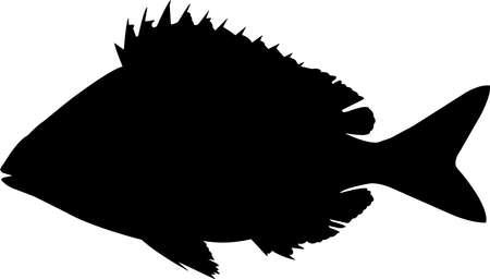 Pinfish Fish Silhouette Vector