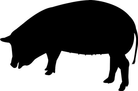 Spotted Pig Vector Silhouette