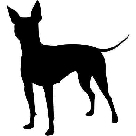 American Hairless Terrier  Silhouette Vector Illustration