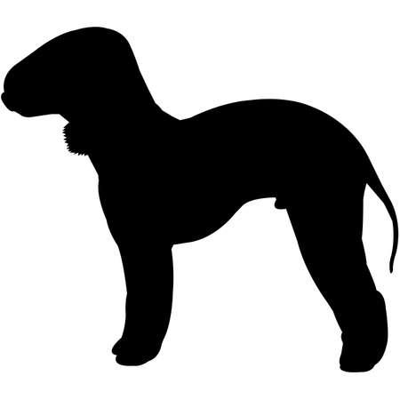 Bedlington Terrier  Silhouette Vector
