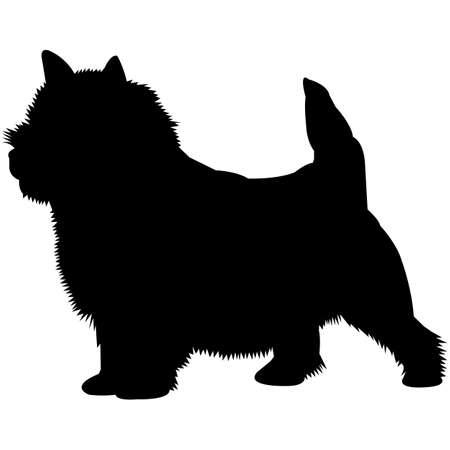 Norwich Terrier Silhouette Vector