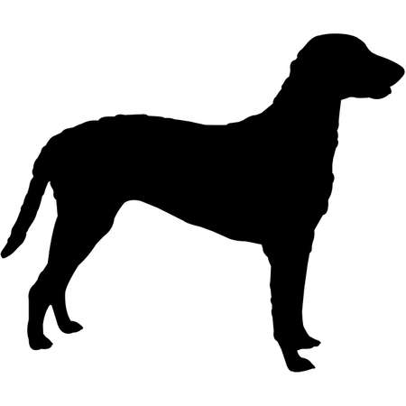 Curly-Coated Retriever Silhouette Vector