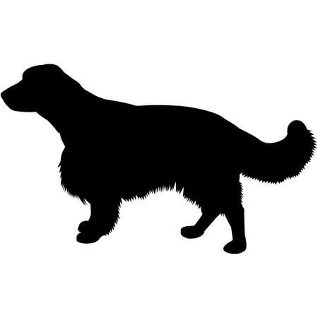 Welsh Springer Spaniel  Silhouette Vector Illustration
