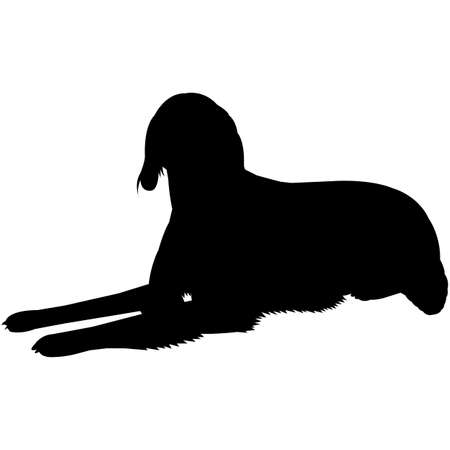 Irish Red & White Setter  Silhouette Vector 写真素材 - 158518922