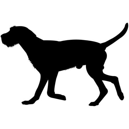 Wirehaired Vizsla  Silhouette Vector  イラスト・ベクター素材