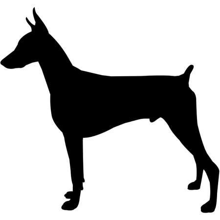 Doberman Pinscher  Silhouette Vector Illustration