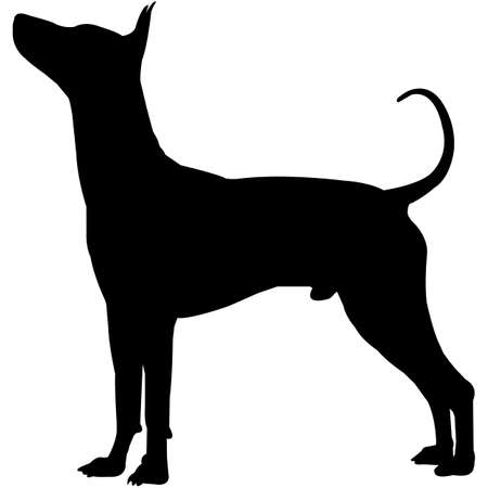 Xoloitzcuintli  Silhouette Vector 写真素材 - 158516580