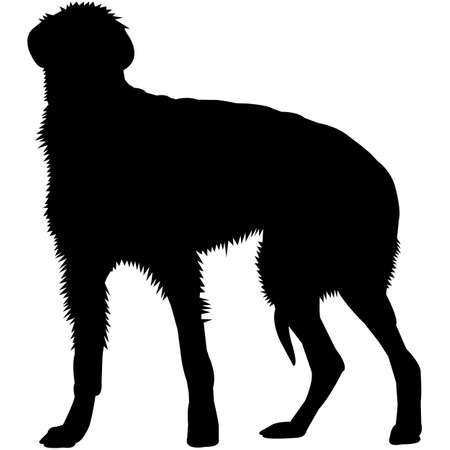 Scottish Deerhound  Silhouette Vector