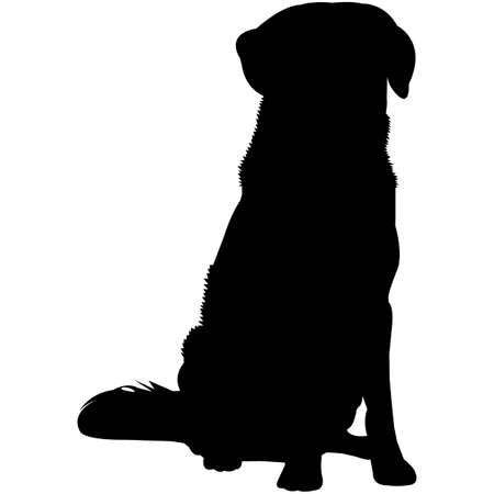 Nova Scotia Duck Tolling Retriever Silhouette Vector