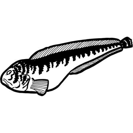 Hand Sketched Catfish Fish Vector