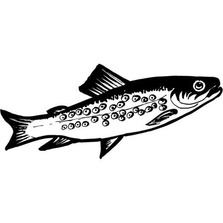 Hand Sketched Brook_Trout Fish Vector