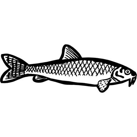 Hand Sketched Gudgeon Fish Vector