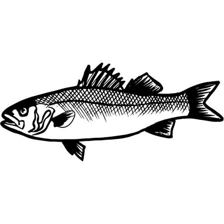 Hand Sketched Bass Fish Vector Vettoriali