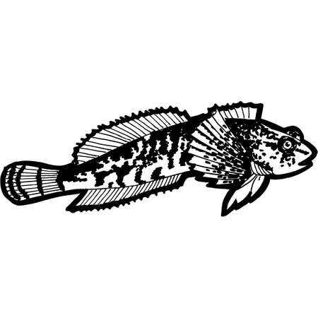 Hand Sketched Bullhead Fish Vector 向量圖像