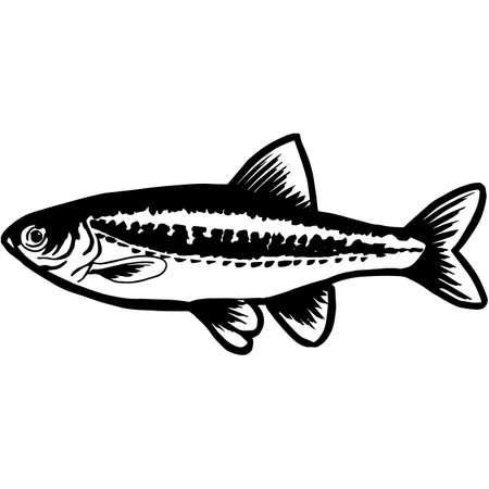 Hand Sketched Minnow Fish Vector Vecteurs