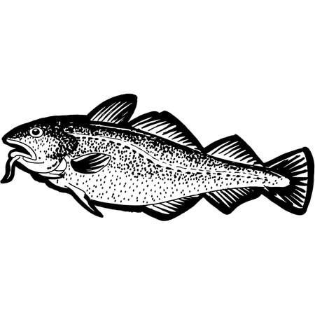 Hand Sketched Cod Fish Vector Иллюстрация