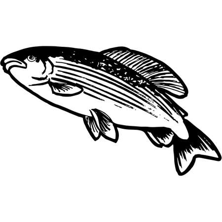 Hand Sketched Grayling Fish Vector