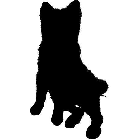 Pomsky dog Silhouette Vector