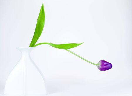 highkey: Tulip Highkey I