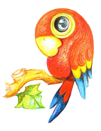 Parrot drawing on a white background photo