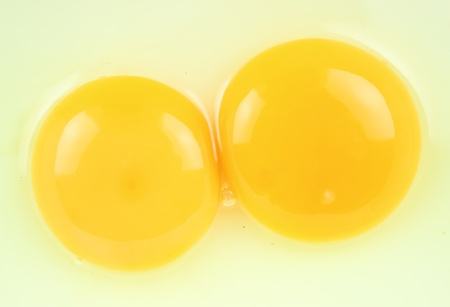 Egg yolk photo