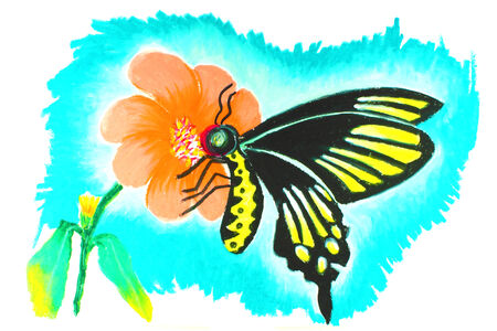 butterfly drawing photo