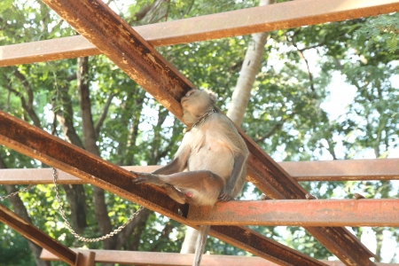 Thai monkey sitting on the iron railing photo