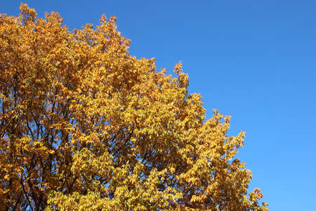 autumn tree background in japan, saitama, Japan