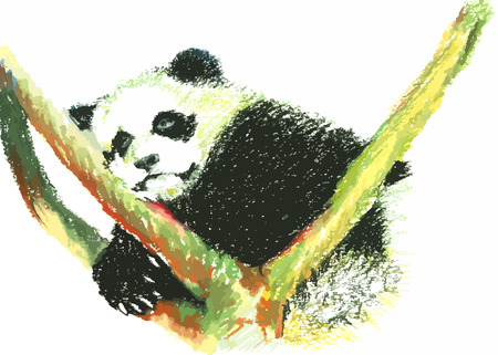 cute panda painting on a white background