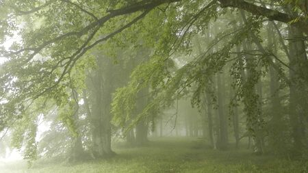 apennines: Green woods in the mist Stock Photo