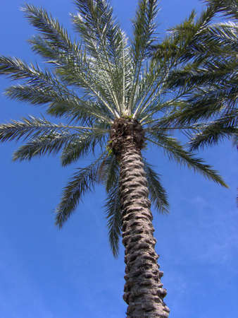 underneath a tropical florida palm tree Stock Photo - 395988