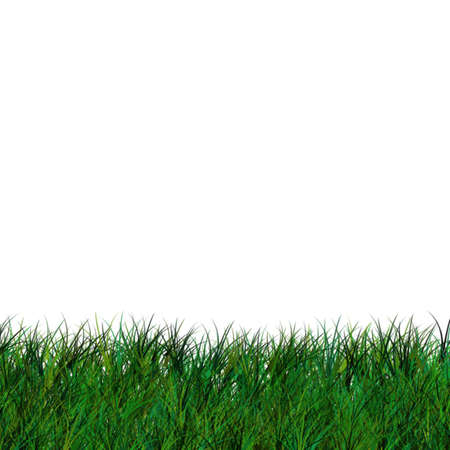 short green grass, isolated over white