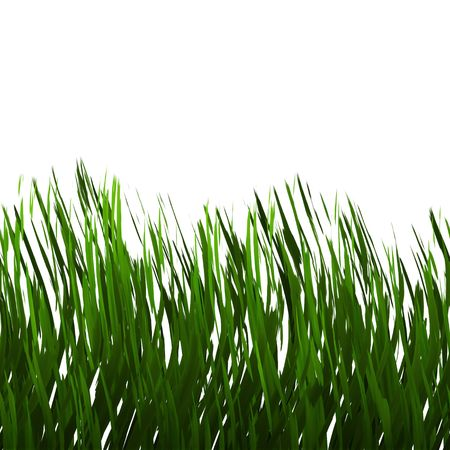Green grass isolated over white - this tiles seamlessly as a pattern in any direction. photo