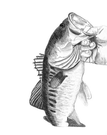 bass fish: A hand drawn pencil sketch of a hand holding a large mouth bass - original artwork by me.