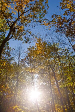 The bright colors of fall as seen in the woods in New England. Stock Photo - 3984306