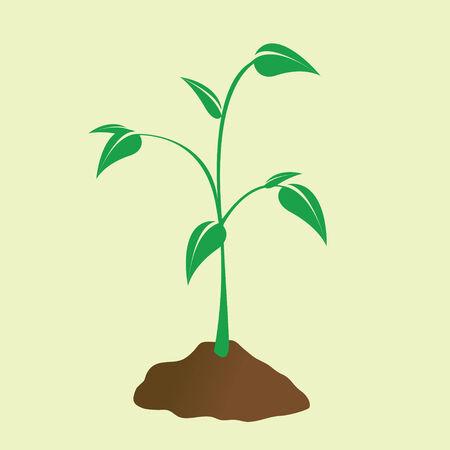 젊은 식물은 흙에서 돋아 난다. 일러스트