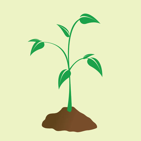 Young plant sprouting forth from the dirt. Vector