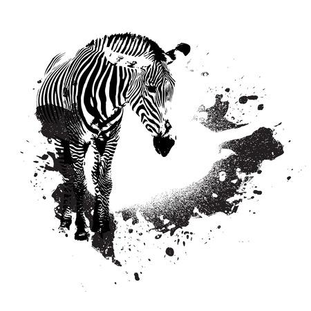 spattered: Cebra en blanco y negro con acentos splatted pintura