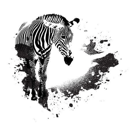 Zebra in black and white with splatted paint accents Vector