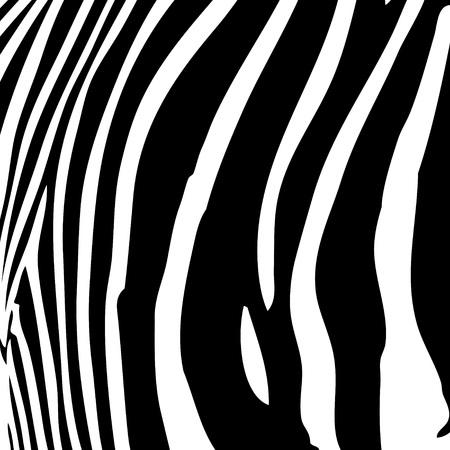 Zebra stripes modèle en noir et blanc qui fonctionne très bien comme un arrière-plan. Banque d'images - 4349350