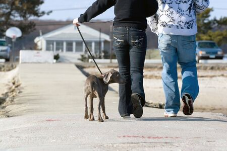 A couple walks a cute weimaraner puppy at the beach. photo