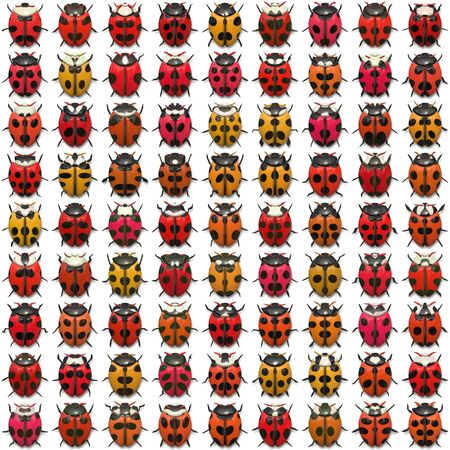an insect: A sheet of ladybug illustrations that tile seamlessly as a pattern.  Isolated over white. Stock Photo