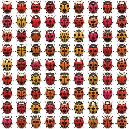 Ein Blatt Marienkäfer Abbildungen, dass Fliesen nahtlos als Muster. Isolierte über weiß. Standard-Bild - 4877308