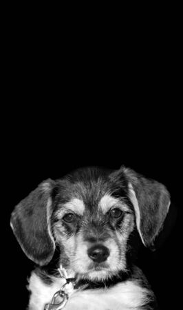 A an adorable puppy isolated over a black background with copyspace. photo