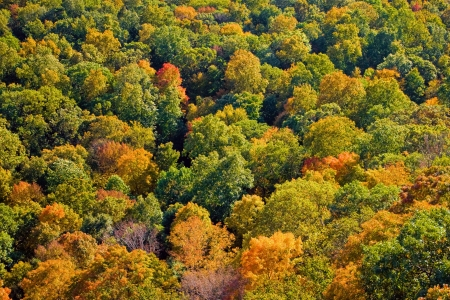 Aerial view of the fall foliage in New England.