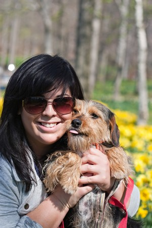 beagle mix: A cute terrier mix breed pup being held by his owner posing in front of the Spring daffodil flowers. Stock Photo