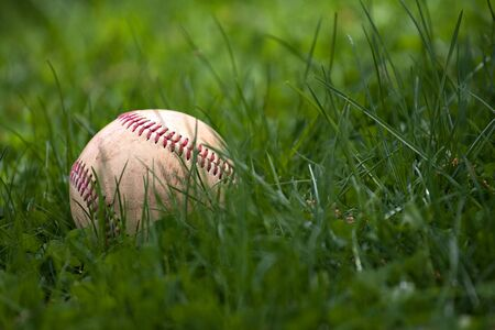 spring training: One aged and worn hardball or baseball laying in the green grass.